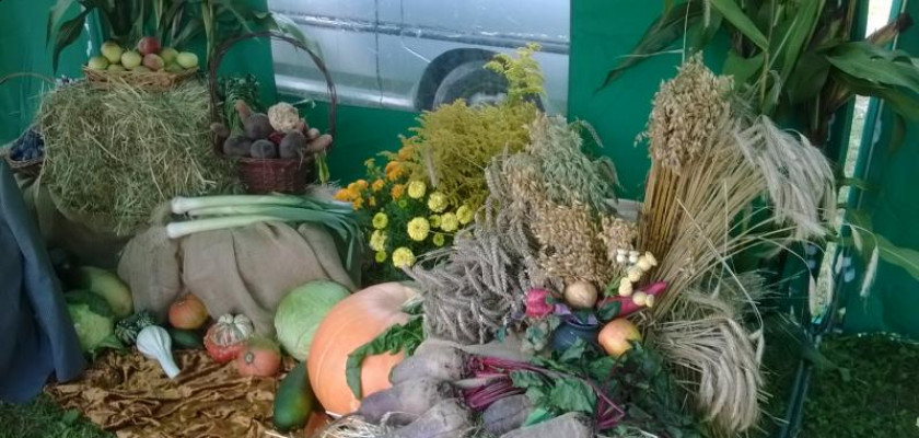 plony rolne: dynie, zborze, pory itd